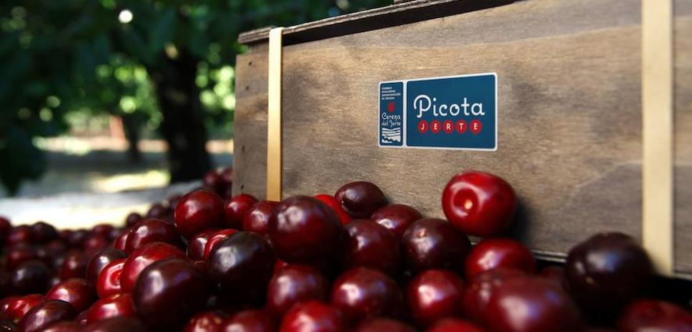 Mercadona compra 4.200 toneladas de picotas y cerezas extremeñas