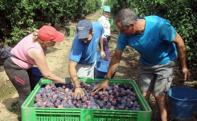 Agricultura trabaja varias medidas para apoyar al sector de la fruta