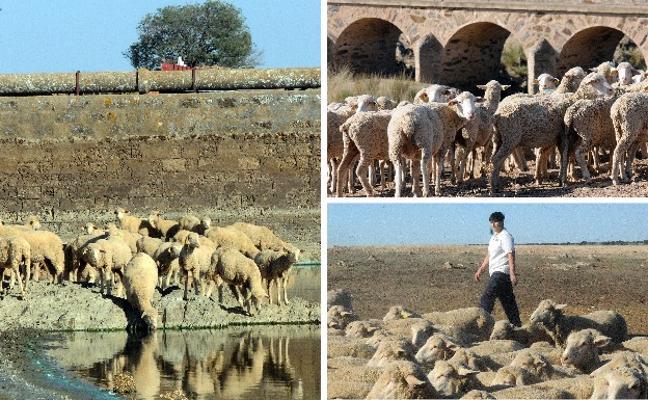 La exportación alegra al ovino