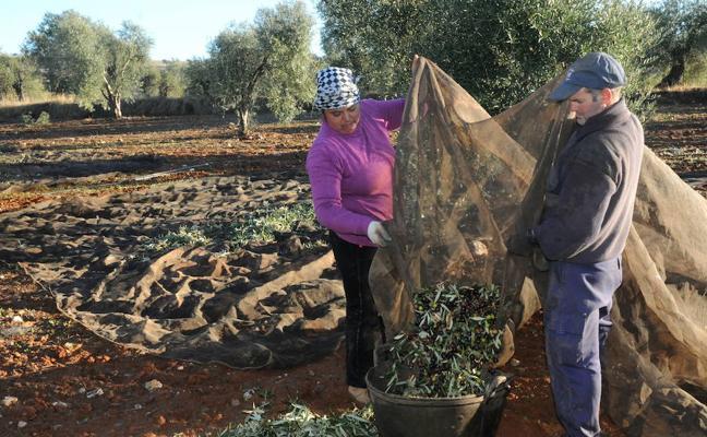 Cooperativas Agro-alimentarias pide la reducción de módulos del IRPF