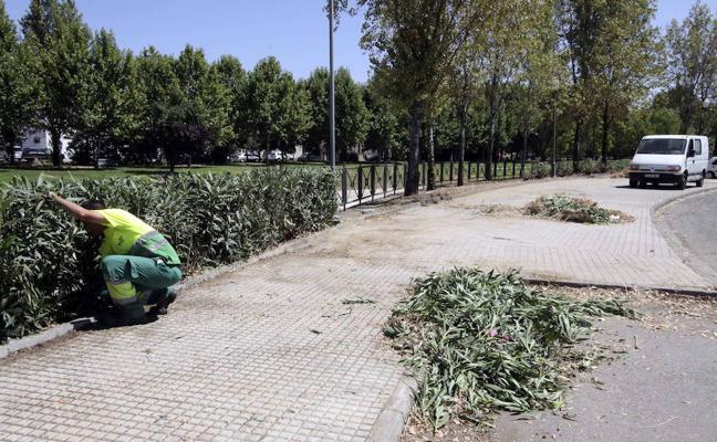 Más de 400 municipios se repartirán 19,2 millones de euros del Plan de Empleo