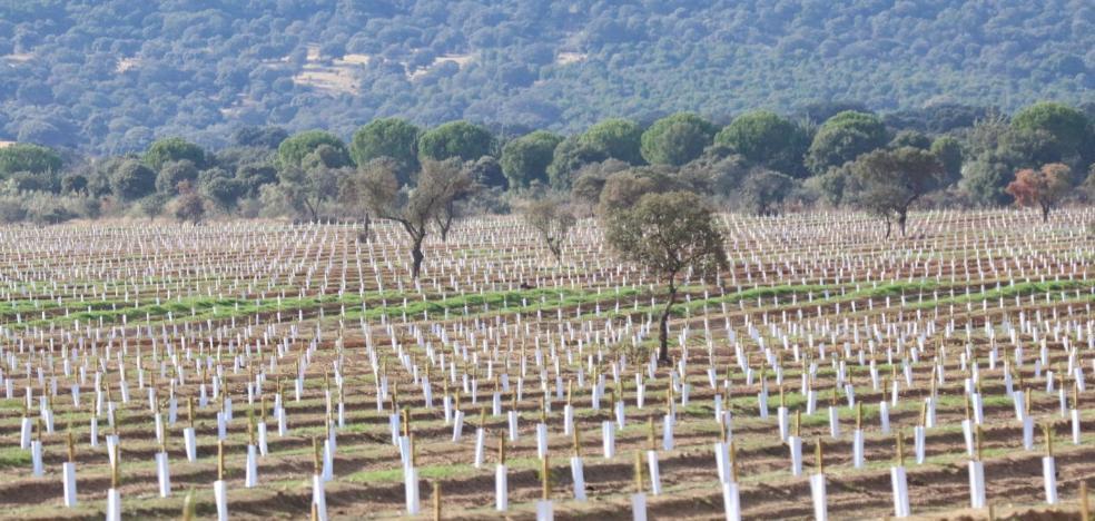 Multa de 240.000 euros por cambiar cultivos en una finca sin permiso previo