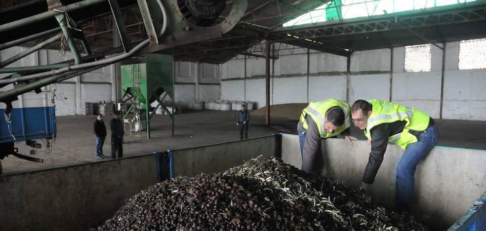 Recuperan en Sevilla casi 4 toneladas de aceitunas sustraídas en Almendralejo