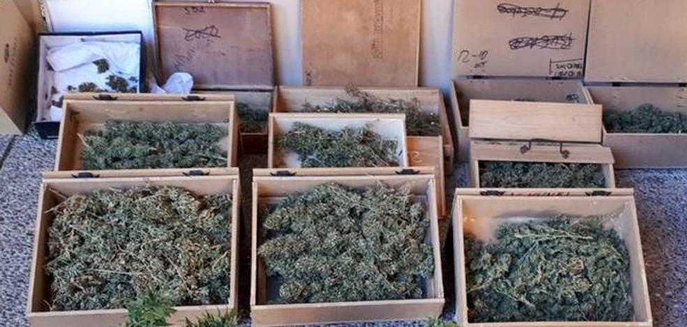 Detenido un vecino de Badajoz que utilizaba su casa como punto de cultivo de marihuana