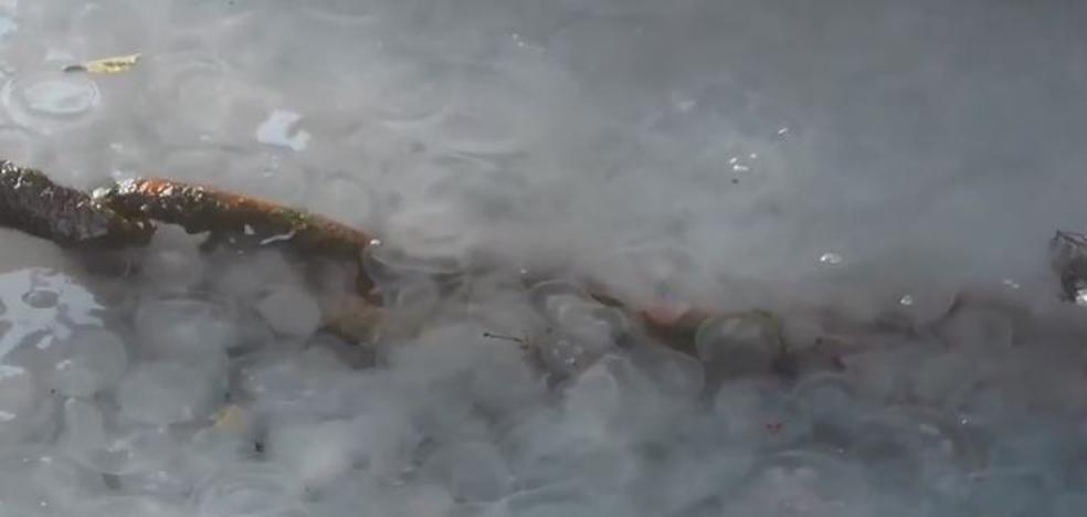 Medusas en Crimea