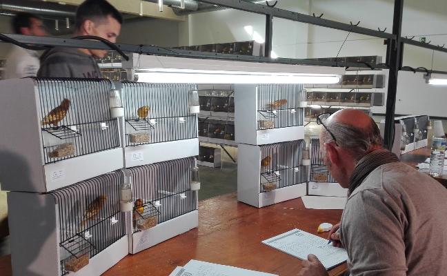 Unos 1.400 pájaros participan en el XI Campeonato regional que se celebra en Almendralejo