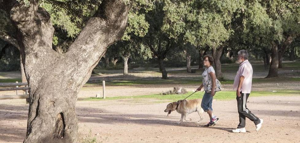 ¿Quién se queda con el perro en caso de divorcio?
