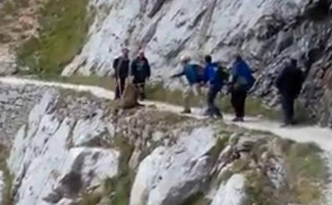 Despeñan a un jabalí por una montaña de Asturias