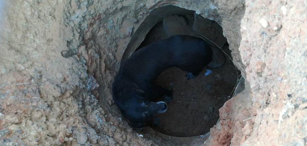 Un perro es rescatado dentro de un pozo en la Barriada de Llera