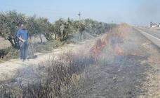Cinco efectos nocivos de la quema masiva de rastrojos