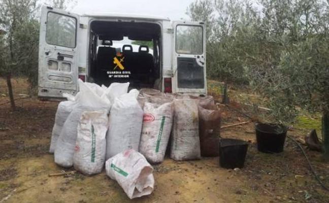 Olivareros de La Garrovilla y Esparragalejo recurren a patrullas ciudadanas para evitar robos