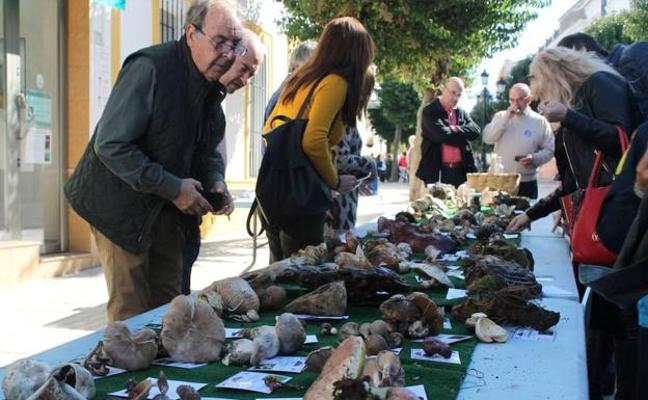 Una conferencia abre las jornadas micológicas de Monesterio