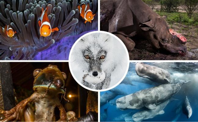 Las fotos de naturaleza más impactantes
