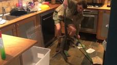 Una sorpresa debajo del horno de la cocina