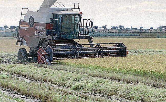 La producción extremeña de arroz alcanza las 148.500 toneladas
