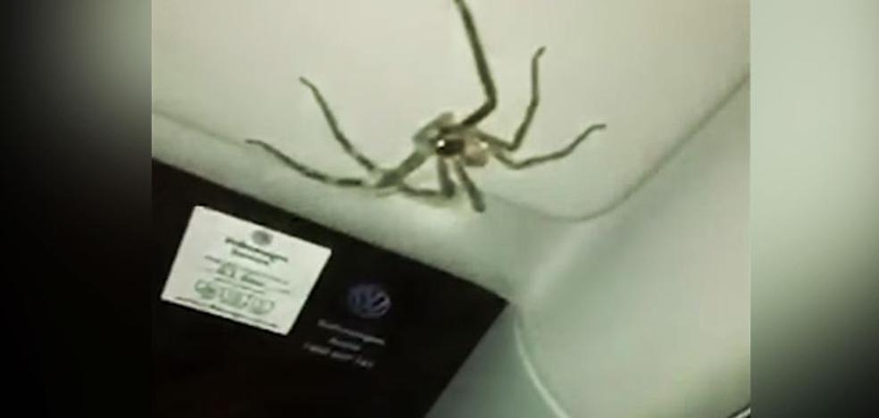 Una conductora aterrorizada por una araña gigante en su coche