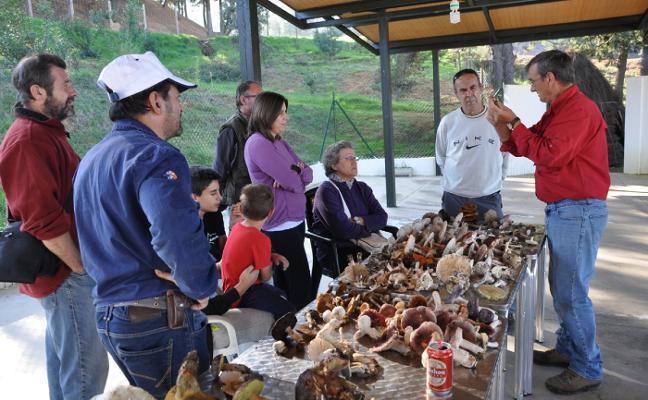 Organizan unas jornadas para conocer setas de Monfragüe
