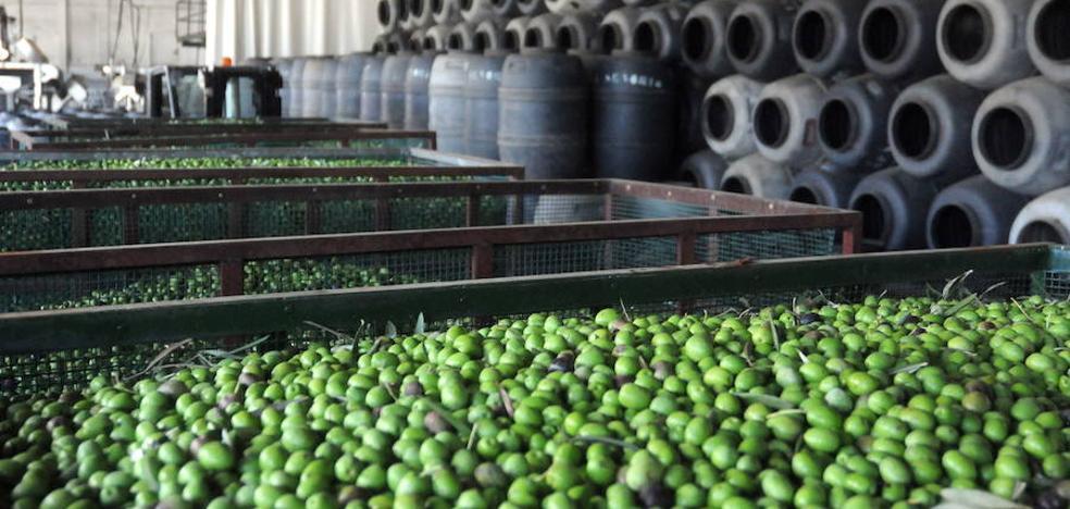 Los nuevos aranceles de EE UU podrían afectar a la exportación de 1,5 millones de kilos de aceituna extremeña