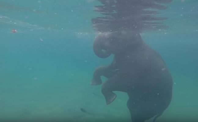 Nadar con elefantes