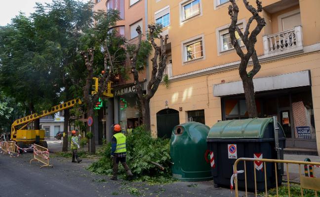 La poda urgente llega a San Fernando, Pardaleras, Las 800 y Santa Marina