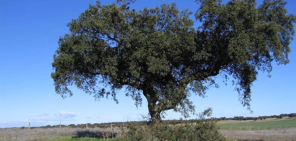¿Cuánta basura acumulan los espacios naturales de Extremadura?