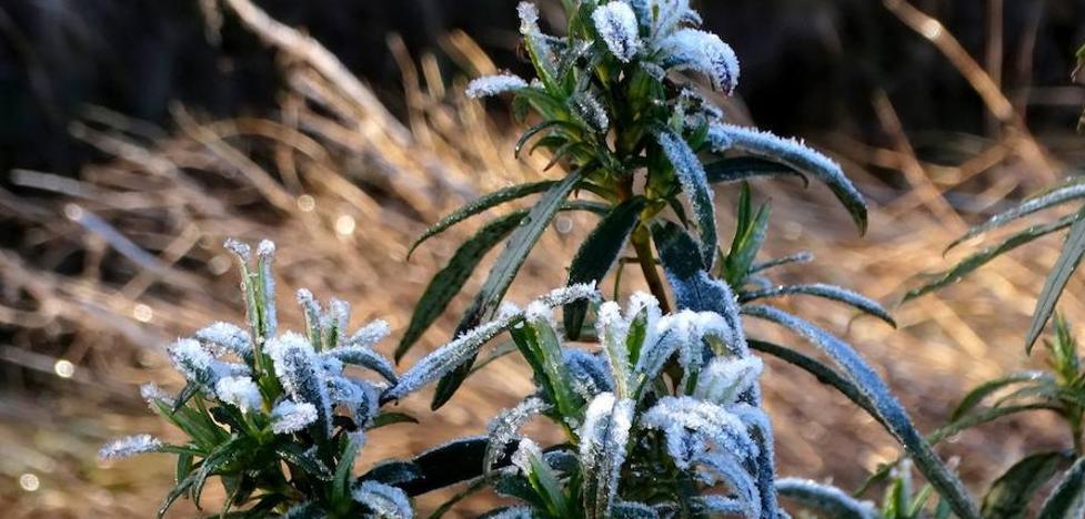 El norte de Extremadura registra temperaturas bajo cero grados