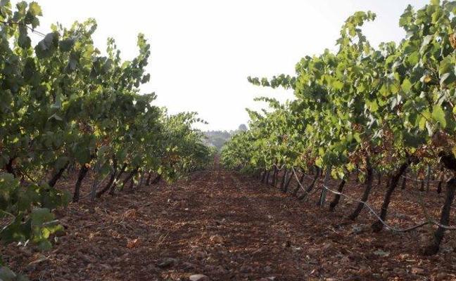 El PSOE extremeño, dispuesto a acudir a los tribunales para aumentar la producción de cava
