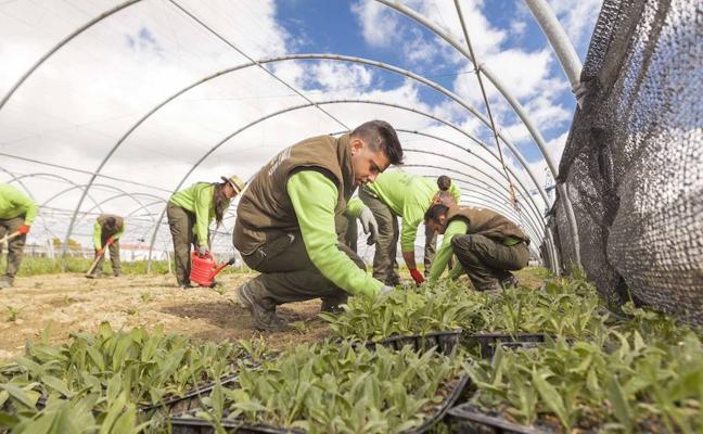 El paro agrícola extremeño se redujo en casi 130 trabajadores en noviembre