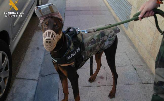Investigan a un veterinario de Badajoz por mutilar rabo y orejas a un perro
