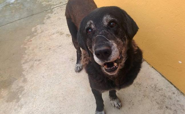 Buscan hogar al perro que fue rescatado de un pozo en Badajoz