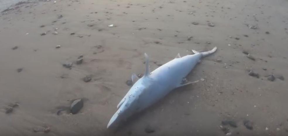 Tiburones muertos