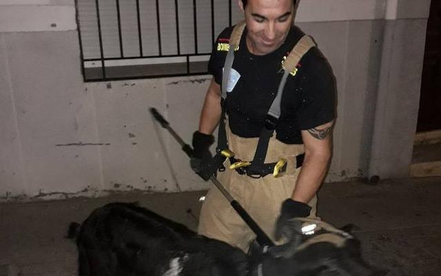 Los bomberos rescatan una cabra de un tejado