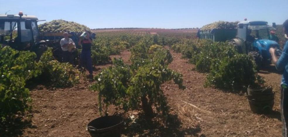 Los agricultores de Alange reciben información sobre el regadío de Tierra de Barros