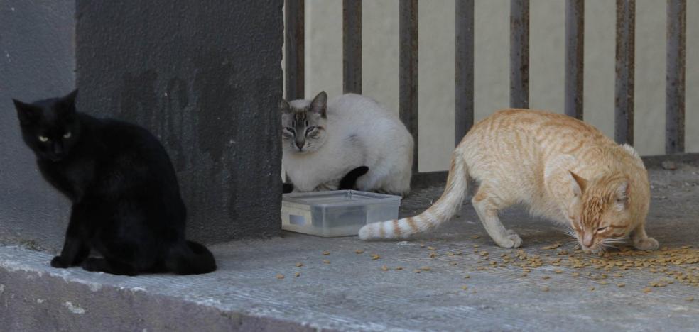 El Refugio de Plasencia inicia una campaña para controlar las colonias de gatos