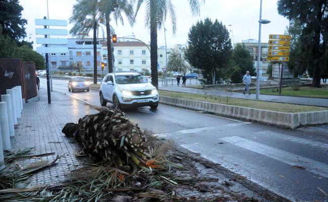 Cortes de luz, un muro caído y árboles partidos en Mérida