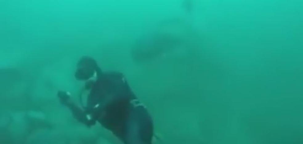 Susto por el ataque de un tiburón
