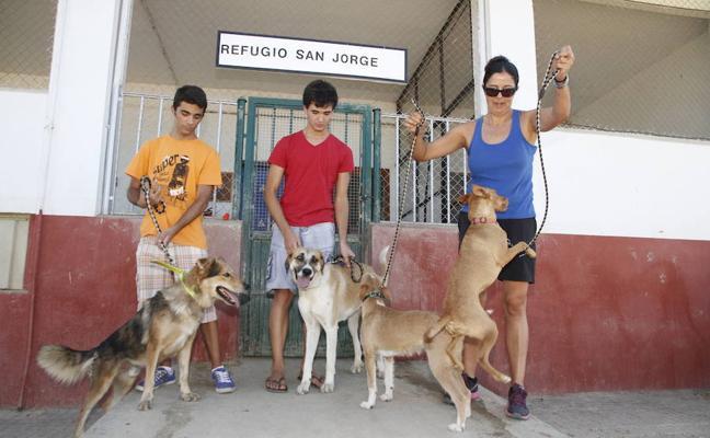 560 animales se abandonan al año en Cáceres, según el Refugio San Jorge