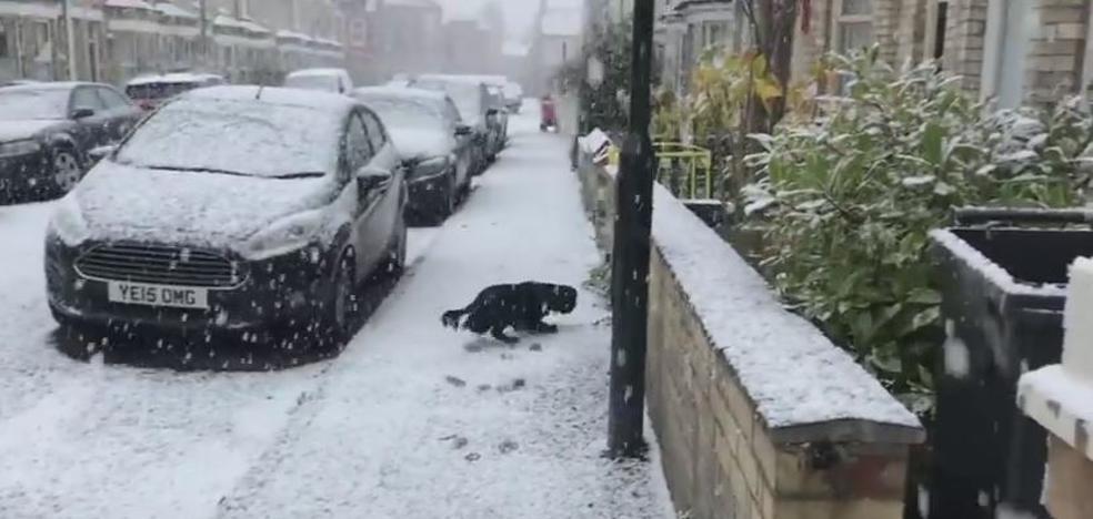 La emoción de la nieve