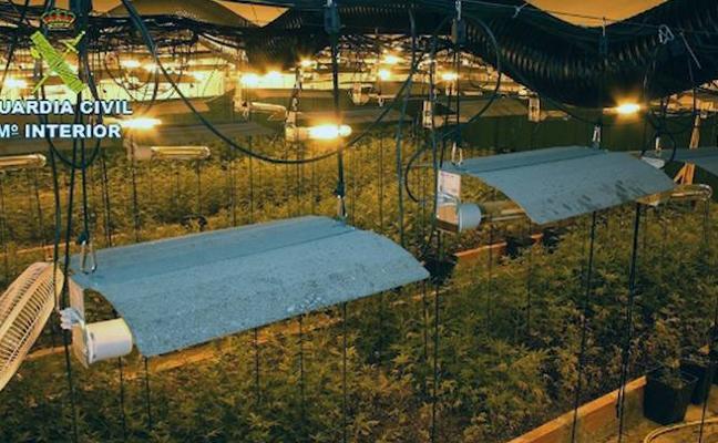 Desmantelan una red que usaba almacenes para cultivar marihuana