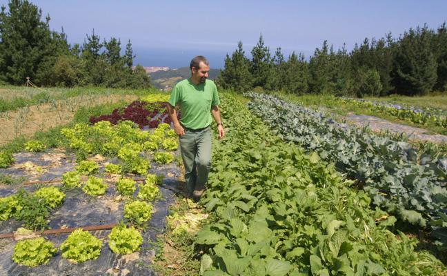 La agricultura ecológica, un sector en auge