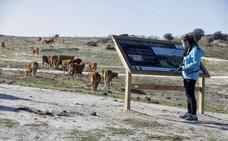 Vacas contra dragones en Los Barruecos