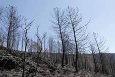 600.000 euros para tratamientos de mejora en los montes quemados en Las Hurdes