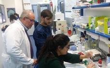 Investigadores de la UEx hallan la proteína que aumenta el riesgo de padecer alzhéimer en diabéticos