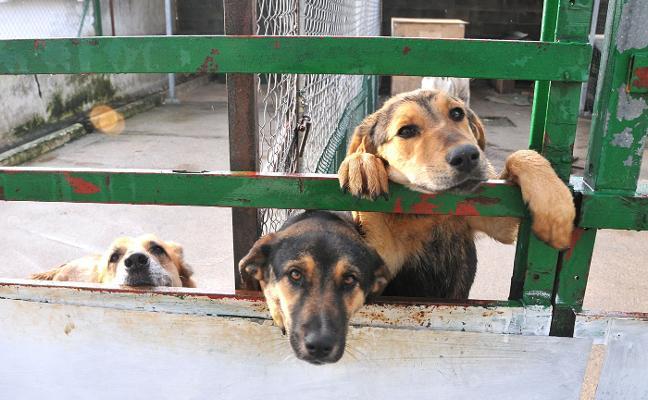 Plasencia pide a la Diputación una red de perreras para frenar los abandonos