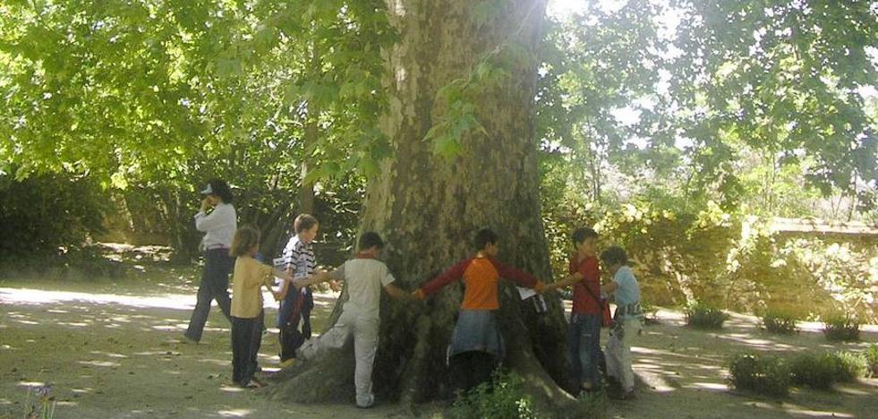 Casar de Cáceres plantará 61 árboles, uno por cada bebé nacido en 2017