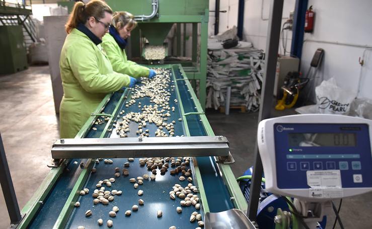 Aumenta la producción de pistacho en Extremadura