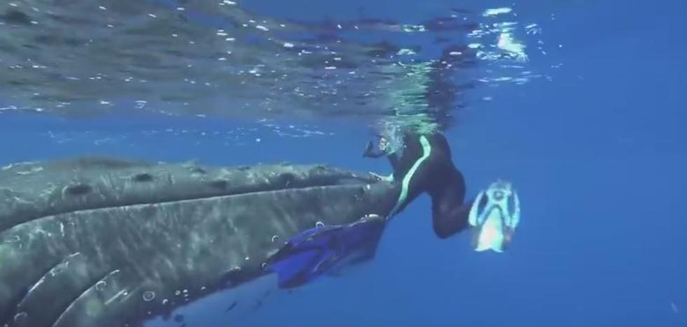 Salvada por una ballena