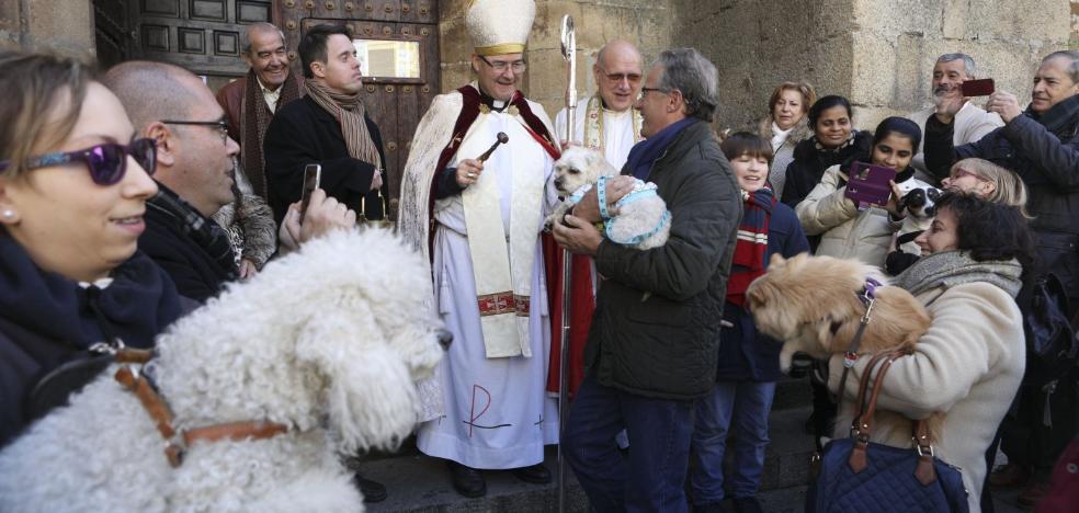 La bendición de mascotas por San Antón se adelanta al domingo en Cáceres