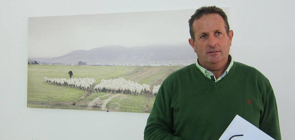 APAG denuncia «relajación» ante los robos de aceitunas