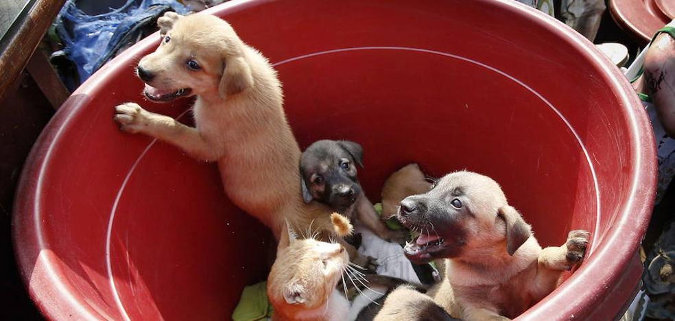 Convocan en Almendralejo una concentración contra el maltrato animal